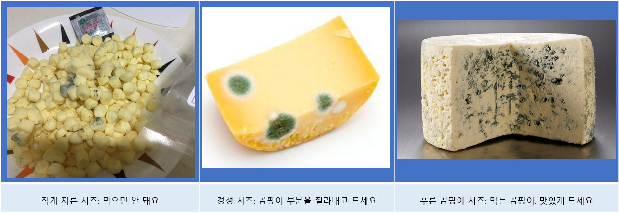 Cheese with mold_all.png