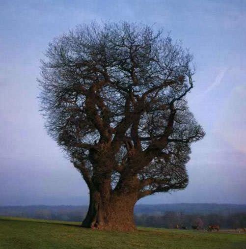 사람나무.jpg